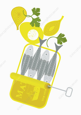 Can of sardines and cut onion, illustration