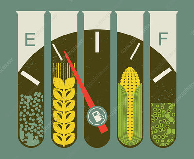 Test tubes containing corn and wheat, illustration