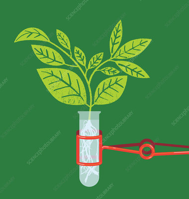 Plant seedling growing in test tube, illustration