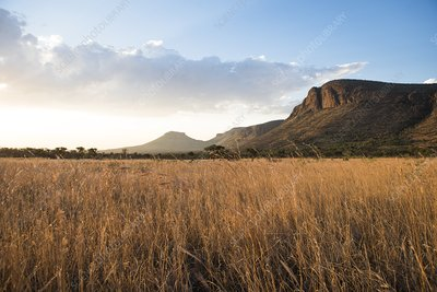 Grasslands and mountains at sunset