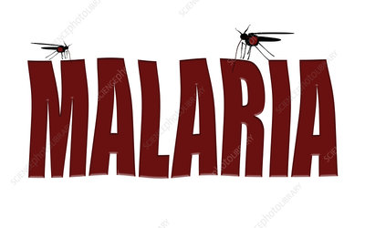 Mosquitoes transmitting malaria, conceptual image