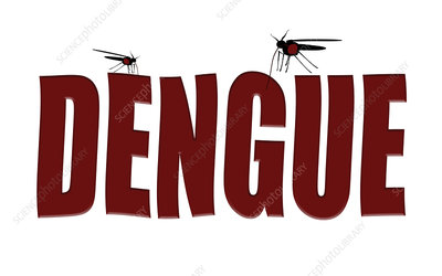 Mosquitoes transmitting dengue fever, conceptual image