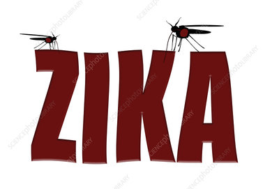 Mosquitoes transmitting zika fever, conceptual image