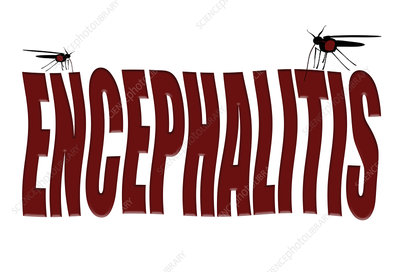 Mosquitoes causing encephalitis, conceptual image
