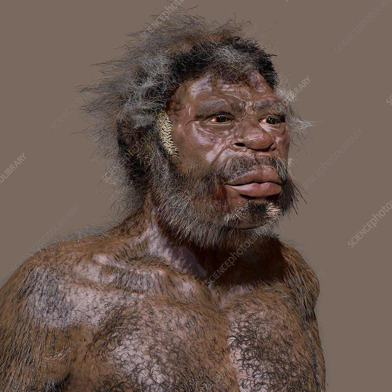 Homo sapiens (Jebel Irhoud), illustration - Stock Image - C039/7657 -  Science Photo Library