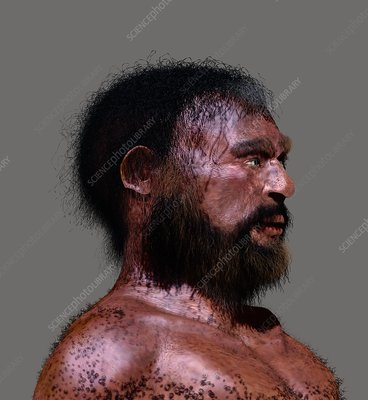 Cheddar Man, illustration
