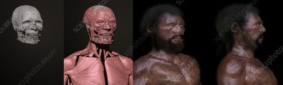 Cheddar Man reconstruction process, illustration