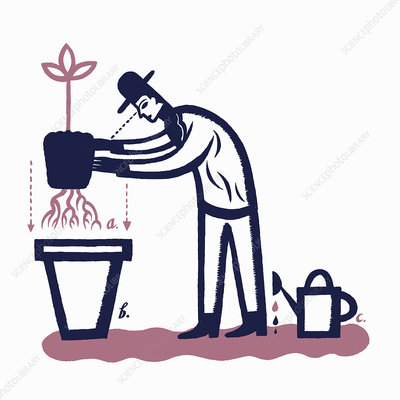 Diagram of man planting tree in pot, illustration