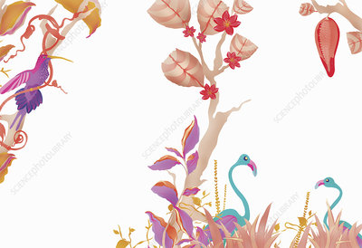 Flowers, vines and birds, illustration