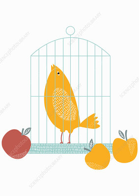 Fruit beside birdcage with singing bird inside, illustration