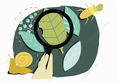 Hand holding magnifying glass, illustration