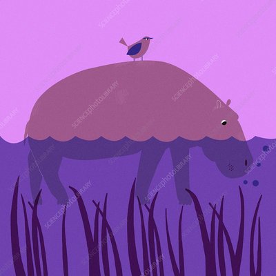 Bird on hippopotamus in river, illustration