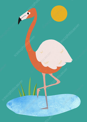 Flamingo standing in pond, illustration