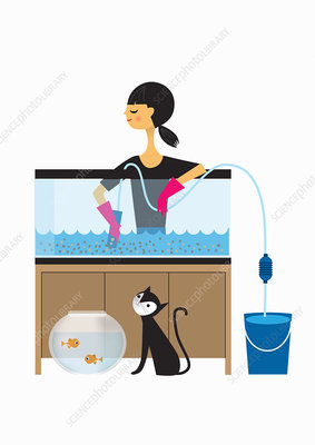 Woman cleaning out fish tank, illustration