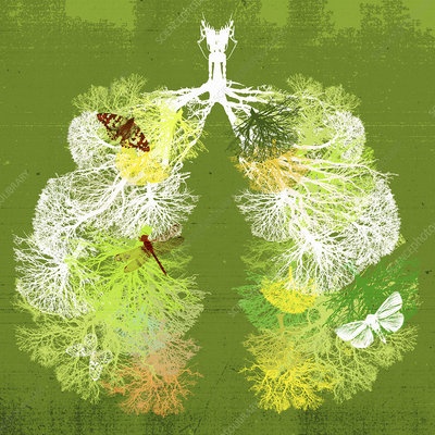 Branches of trees forming healthy lungs, illustration