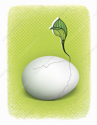 Seedling growing from cracked egg, illustration
