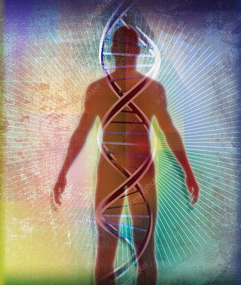 Double helix over human body, illustration