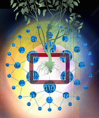 Binary code data around tree, illustration