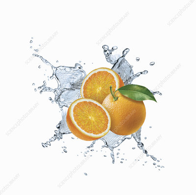 Water splashing around oranges, illustration