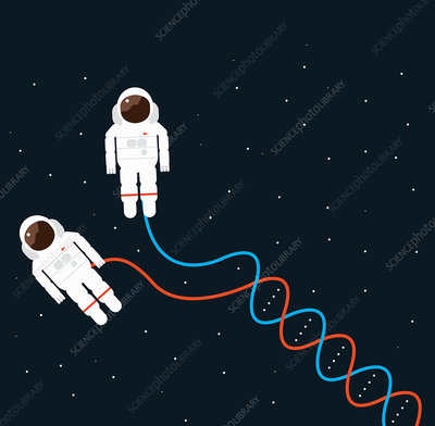 Double helix hose connecting to astronauts, illustration