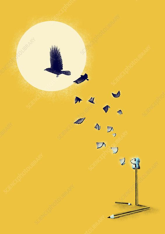 Pencil shavings turning into flying birds, illustration