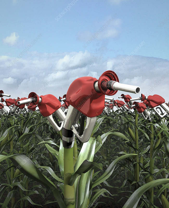 Fuel pumps growing from corn stalks, illustration