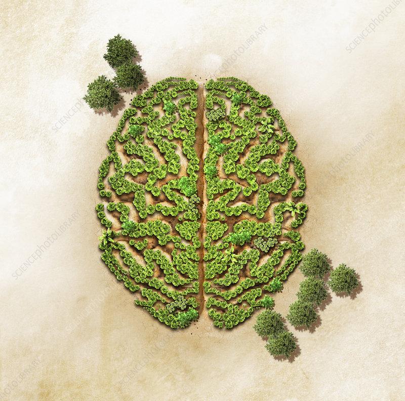 Green trees forming brain, illustration