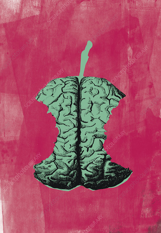 Human brain as apple core with missing bites, illustration