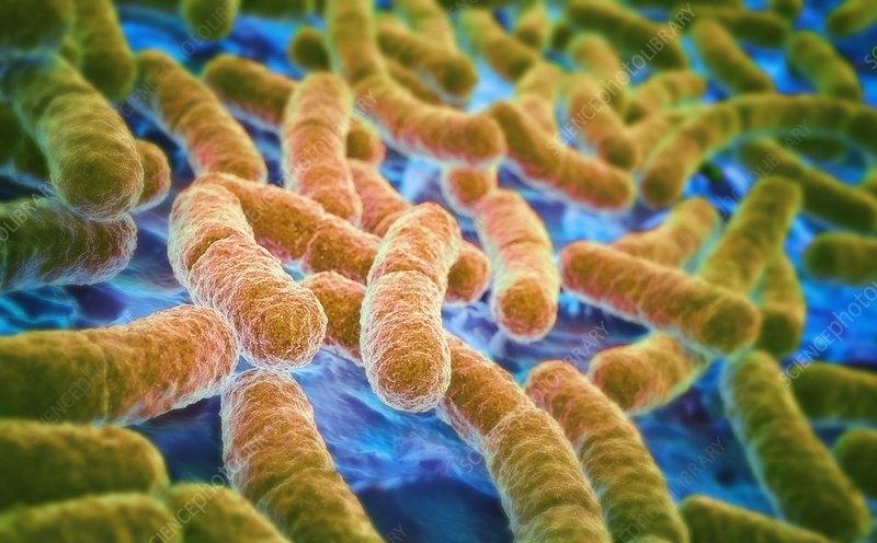 E. coli bacteria, illustration