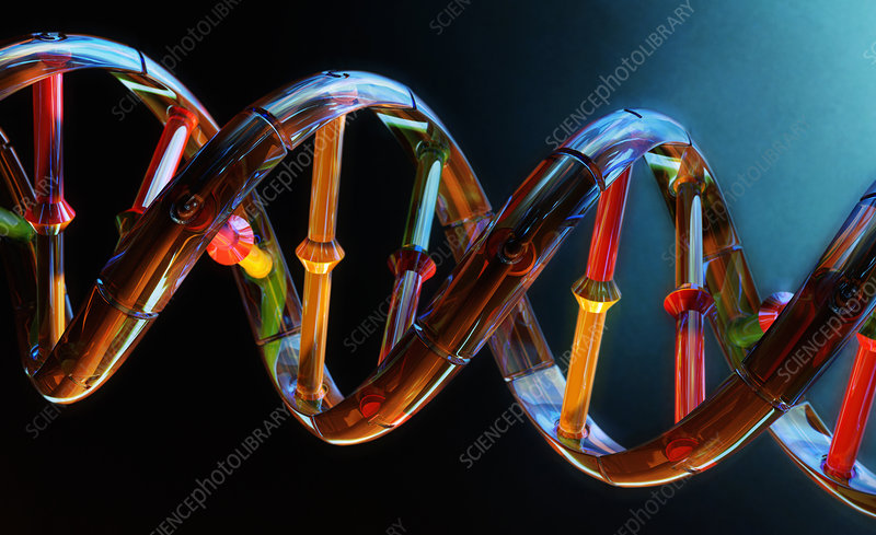 DNA double helix, illustration