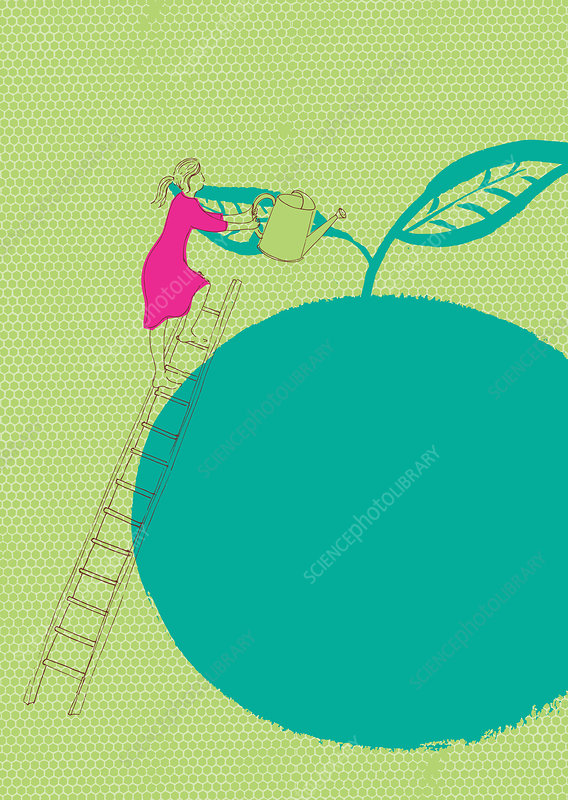 Woman on ladder watering large apple, illustration