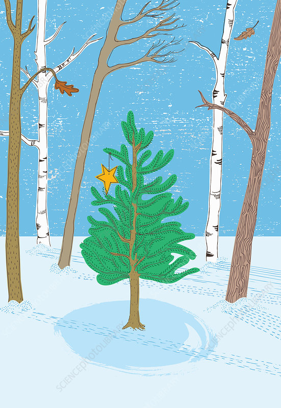 Christmas tree in woods, illustration