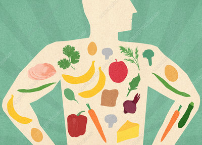 Variety of healthy food inside of man's body, illustration