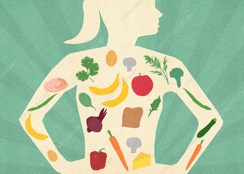 Variety of healthy food inside of woman's body, illustration