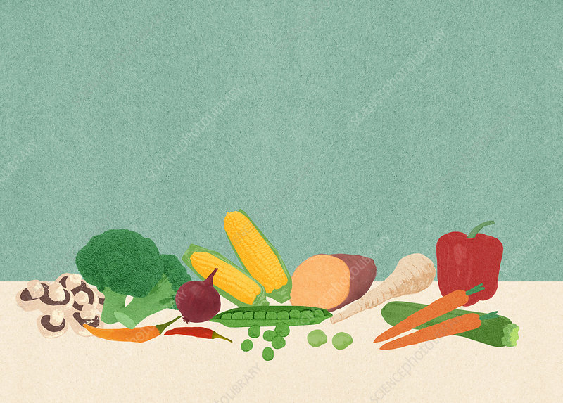 Assortment of fresh vegetables, illustration