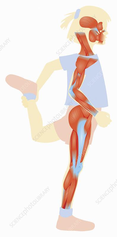 Girl stretching leg muscles, illustration