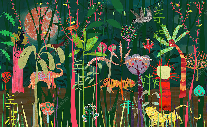 Wild animals jungle, illustration