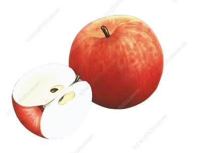 Fiesta apples, illustration