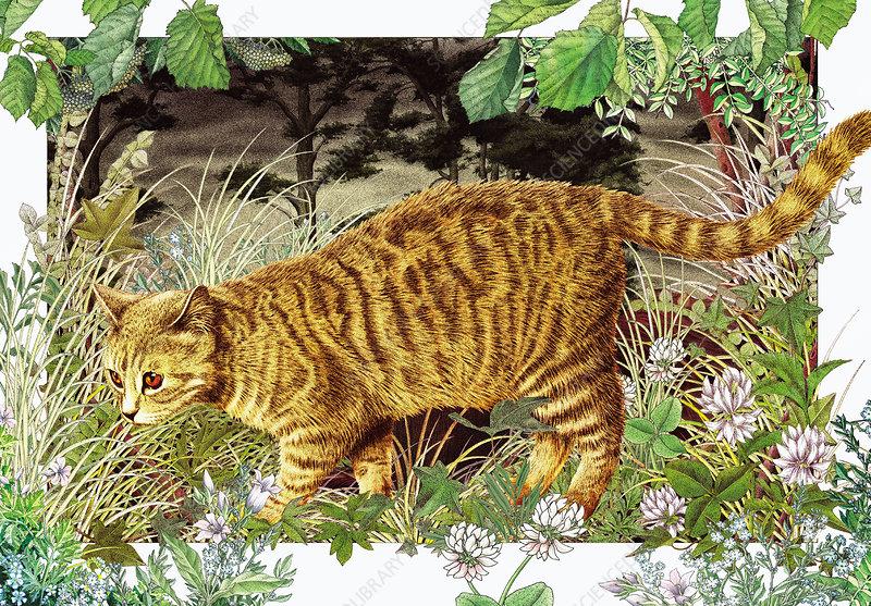 Domestic cat hunting in grass, illustration
