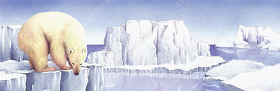 Polar bear on the edge of iceberg, illustration