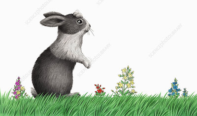 Rabbit rearing up in meadow, illustration