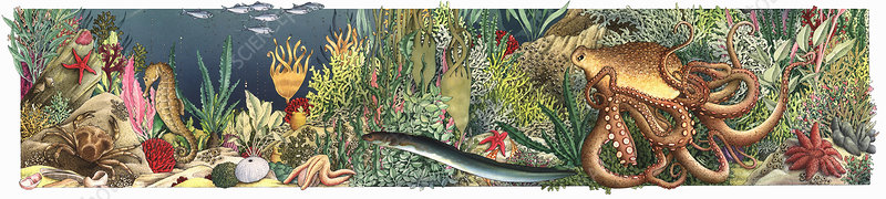 Lush seabed with variety of plants and animals, illustration