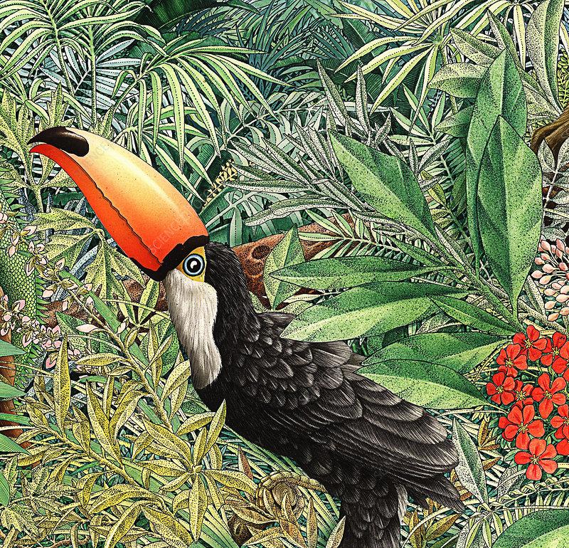 Toucan in lush foliage, illustration