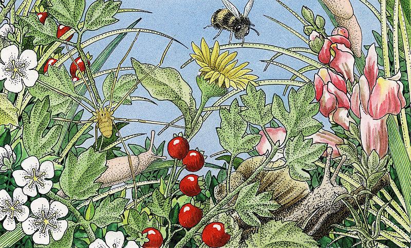 Bee, snail and slug in wildflowers, illustration