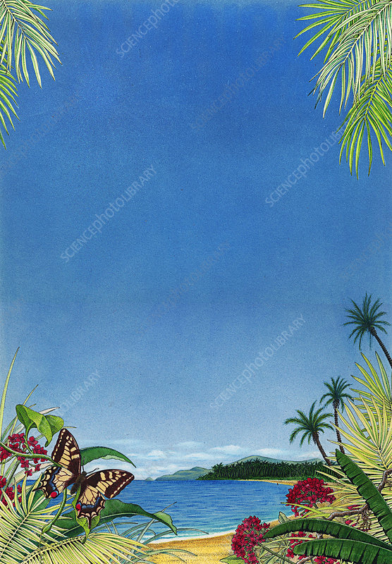 Tropical beach in West Indies, illustration