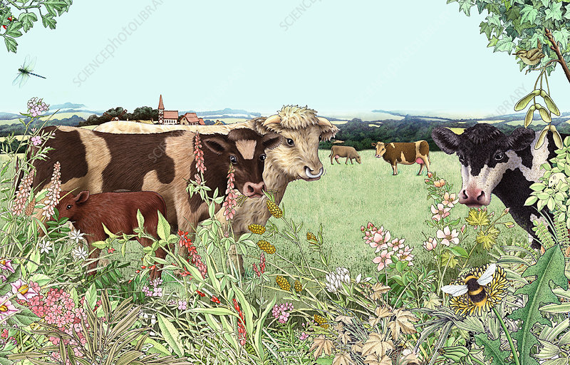 Cows, bull and calf in summer pasture, illustration