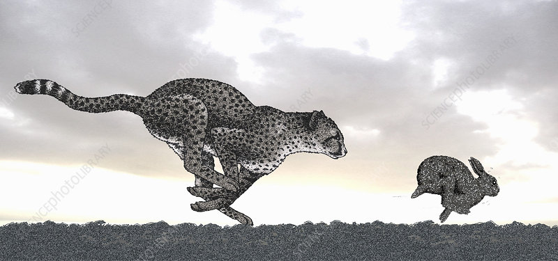Cheetah chasing rabbit, illustration