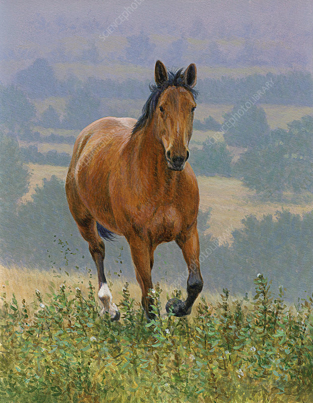 Brown horse running in countryside, illustration
