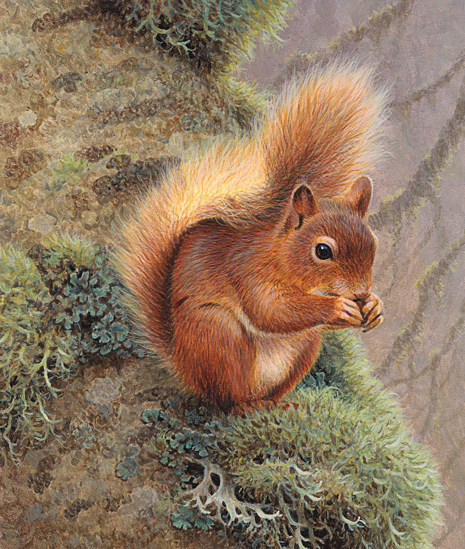 Red squirrel eating nut, illustration