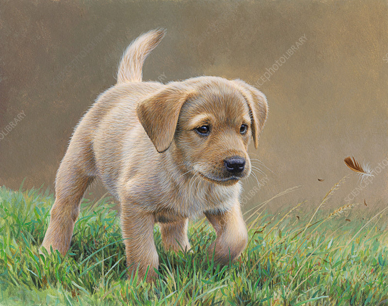 Yellow labrador puppy chasing feather in grass, illustration